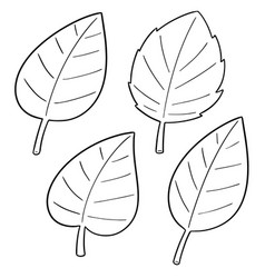 set leaves vector image
