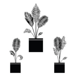 interior palm trees silhouette on the pot vector image vector image
