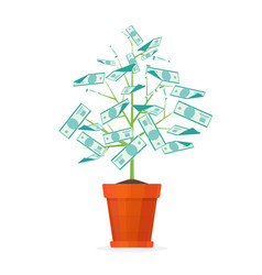 tree money in a pot vector image