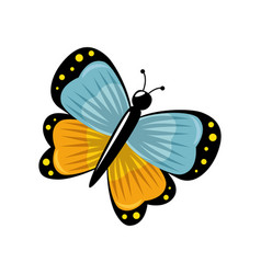 Beautiful butterfly icon vector