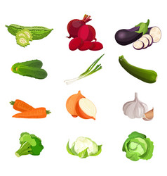 set of vegetables zucchini carrots cucumber vector image