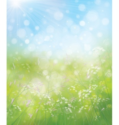 spring flowers sky vector image