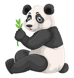 Panda chewing green leaves vector image