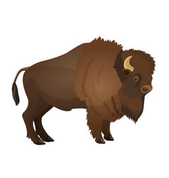 Bison large even-toed ungulate realistic vector