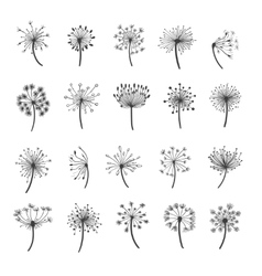 Dandelion silhouette icons vector image