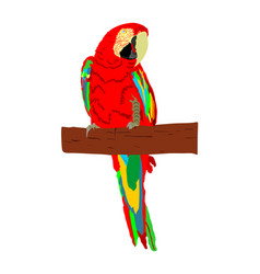 Macaw parrot colorful ara isolated vector