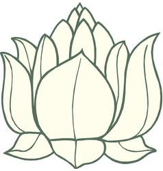 white lotus icon vector image