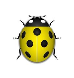 Ladybug yellow realistic cartoon icon vector image vector image