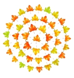 Maple leaves round frame vector image