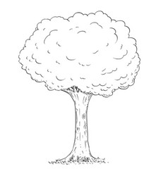 Cartoon drawing tree vector