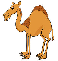 Dromedary camel cartoon animal character vector