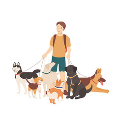 happy boy walking his purebred dogs on leash vector image