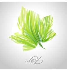 Shiny green striped maple leaf vector