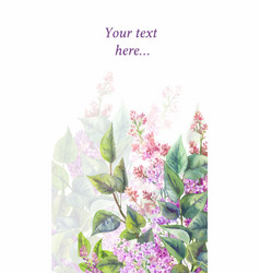 purple lilac on a white background watercolor vector image vector image