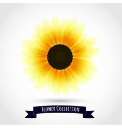Colorful sunflower isolated on white vector image vector image