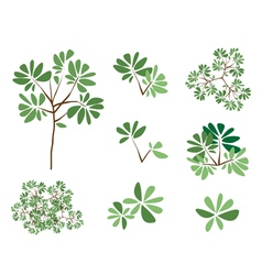 A Set of Isometric Green Trees and Plants vector image