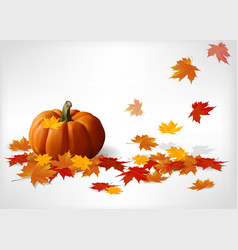 Autumn and pumpkins white background vector image