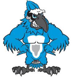 blue jay sports logo vector image