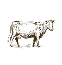Farm animal cow standing sketch dairy farm vector