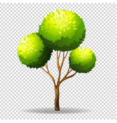 gree tree on transparent background vector image