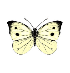 hand drawn small white butterfly vector image