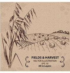 Fields with Harvest and Oats vector image