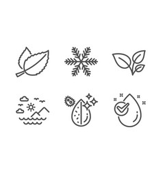Mint leaves leaves and snowflake icons set sea vector