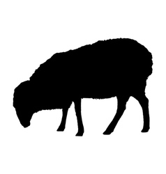 Sheep on white vector