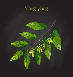 Branch of ylang-ylang vector