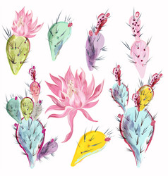 collection beautiful cactus flowers in vector image