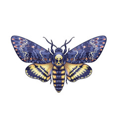 Colored acherontia styx butterfly isolated on vector