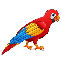Cute macaw bird cartoon posing vector