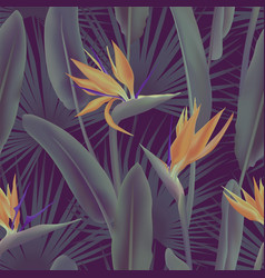 Palm leaves and strelitzia reginae flower known as vector