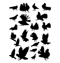 pigeons bird silhouettes vector image
