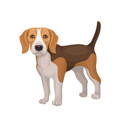 Portrait of standing beagle puppy small dog with vector
