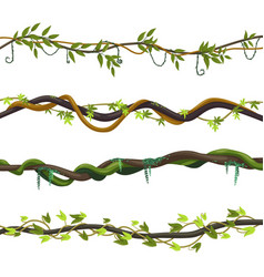 set isolated jungle vines twisted liana plant vector image