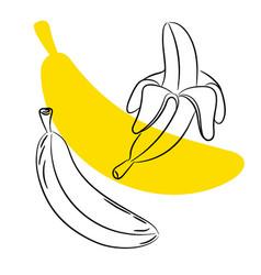 sketch banana fruit vector image