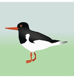 An oyster catcher vector image