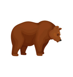 Flat icon of big bear with brown fur side vector