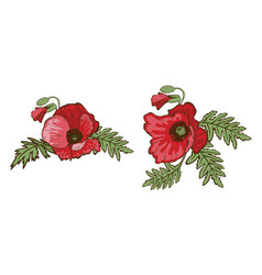 Hand drawn red poppies isolated on white vector