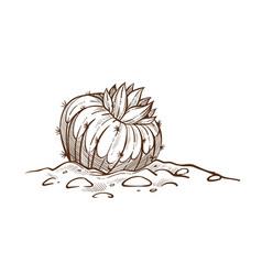 house plant cactus sketch indoor flower vector image