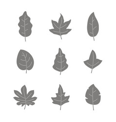 Set of monochrome icons with leaves vector