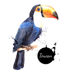 hand drawn sketch watercolor tropical bird toucan vector image