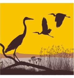 Herons at sunrise vector