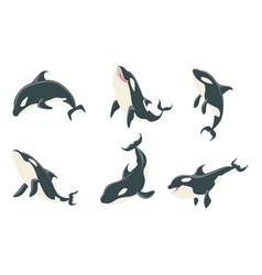 killer whales set orca marine mammal animal vector image