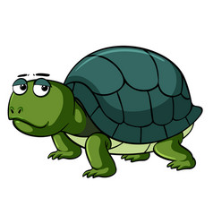 sad turtle on white background vector image