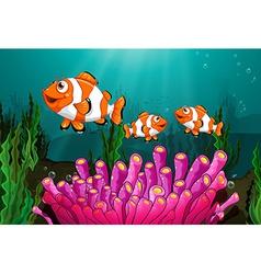 Clownfish vector image vector image