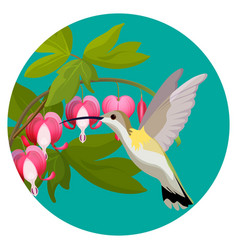 bleeding heart flowers and hummingbird isolated vector image vector image