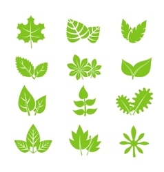 Green leaves icons set vector image