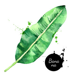 hand drawn sketch watercolor tropical leaf banana vector image